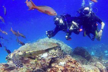 TurtleCoiba